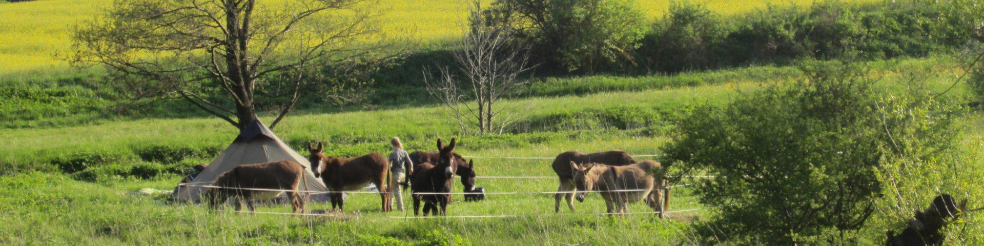 Pack.Esel Eselwandern
